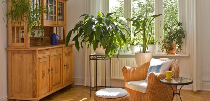piante in casa, benessere e migliore qualità dell'aria | italia free